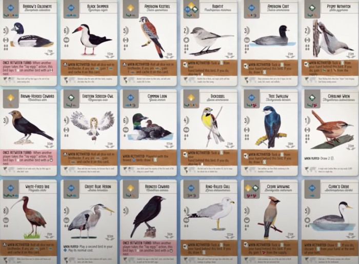 How to Play Wingspan Board Game - All birds